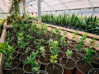 hot weather plants