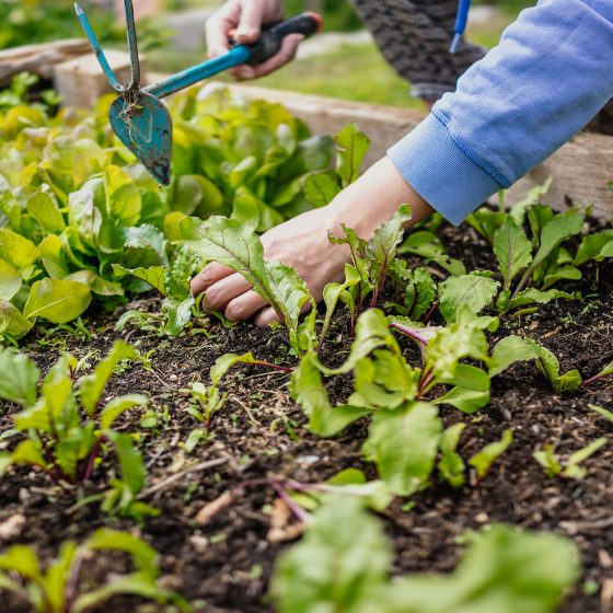 how to prepare a garden bed
