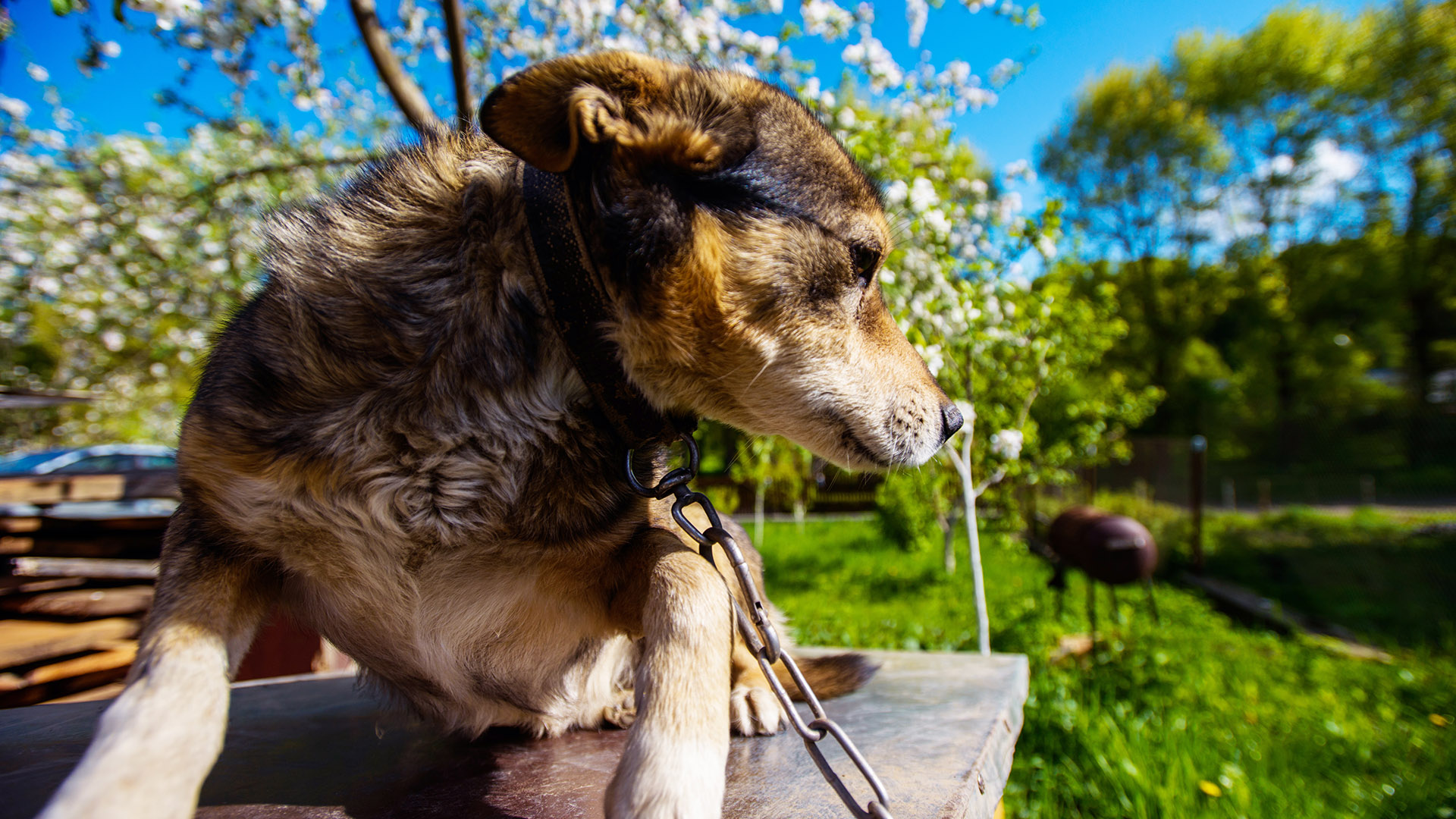 dog boundary fence