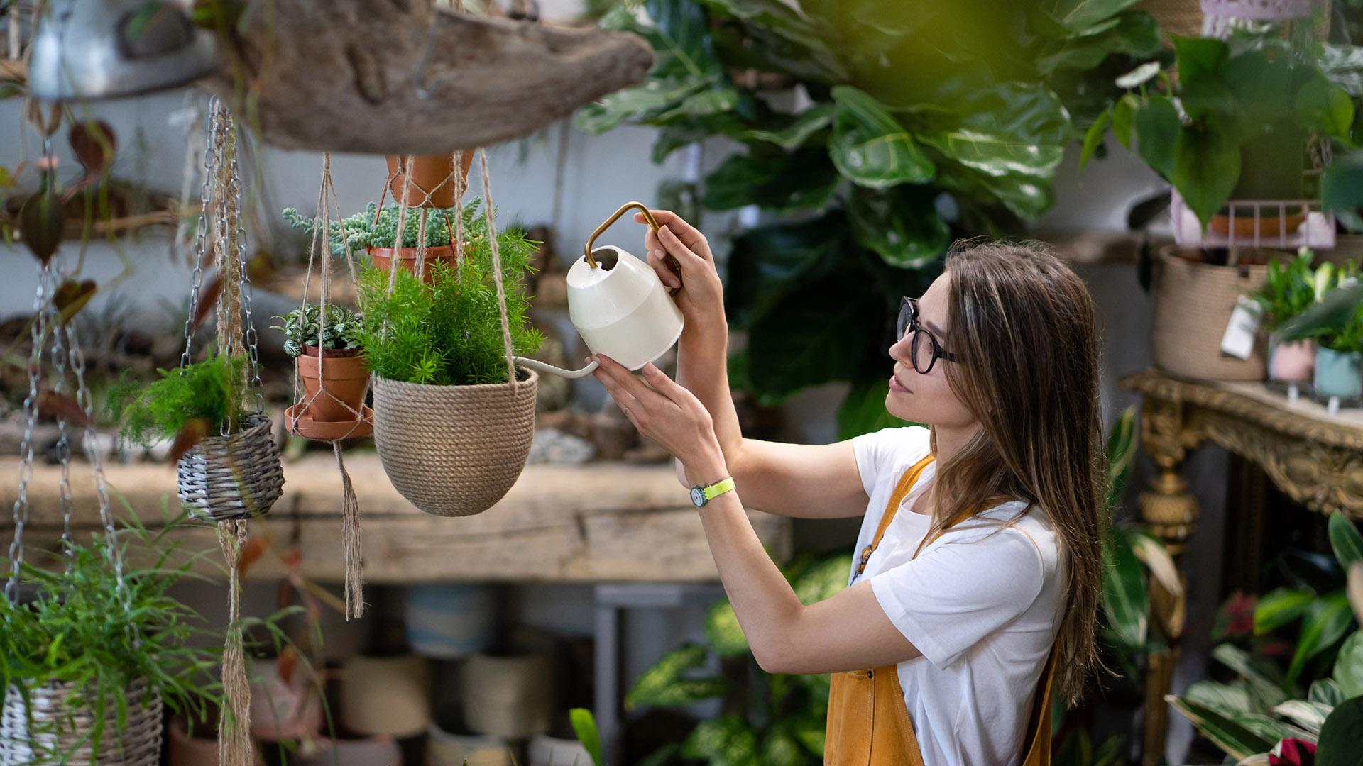 self watering indoor pots